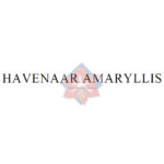 havenaar amaryllis
